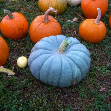 From the Archives: Teal Pumpkin Project: Maker Edition